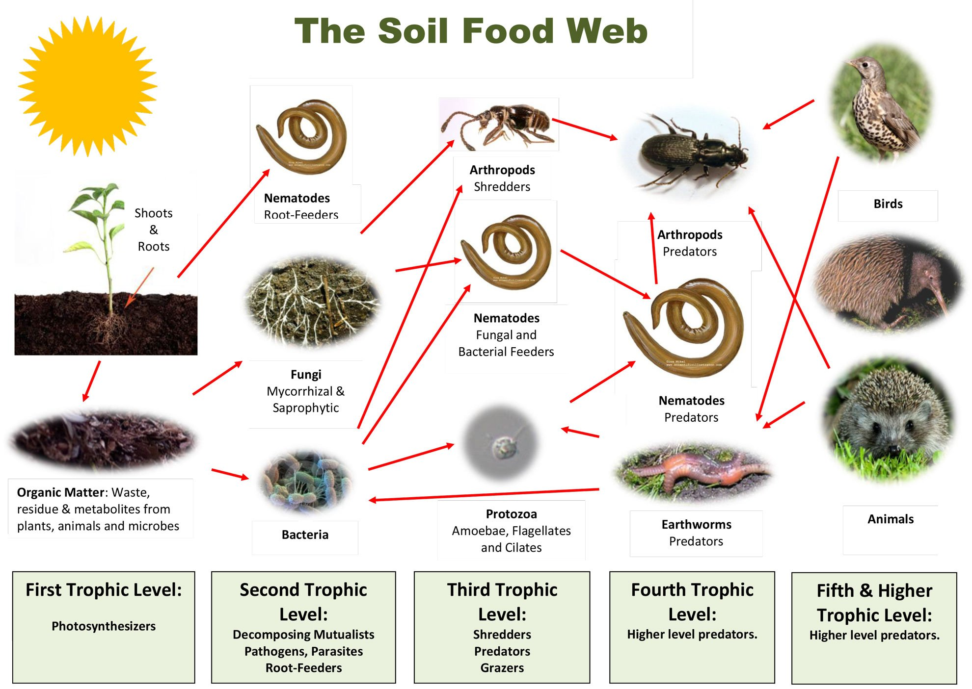 Benefits of a healthy foodweb