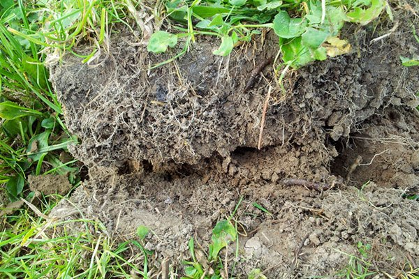 repairing the soil to restore a healthy balance