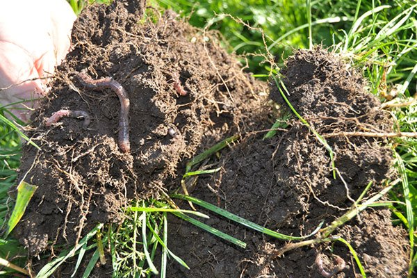 microbial assessments to ascertain soil requirements